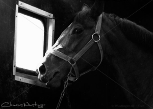 black horse in