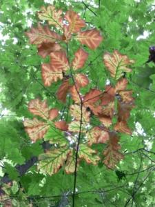 20080914113107 herbst p1020616 in