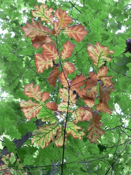 20080914113107 herbst p1020616 in Flora
