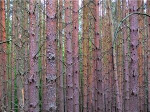 20080914113403 woods p1020613 in