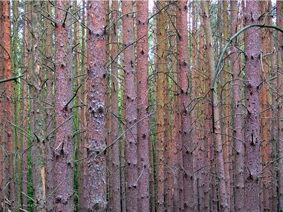20080914113403 woods p1020613 in Flora
