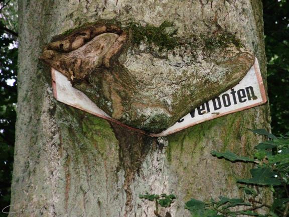 20090706091319 verboten p7050346 in Flora