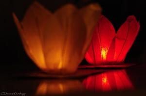 20120314005316 lotus lantern cwd7794 in
