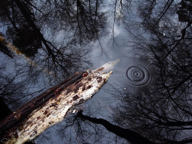 20120318210924 drop in wood r0014630 50 in Landschaft