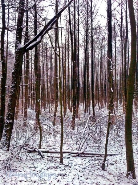 20130211154615 winterwald img 20130210 160829 in