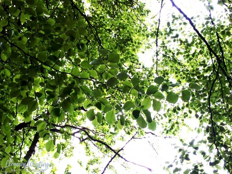 20130512230758 greeeenleaves img 20130511 183824 in Flora