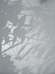 20141117133054 winterlight leaves shadows 101237 in