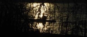 Paddler hinter Schilf im goldfarbenen Sonnenuntergangs-Gegenlicht auf der Unter-Havel im Dezember 2016
